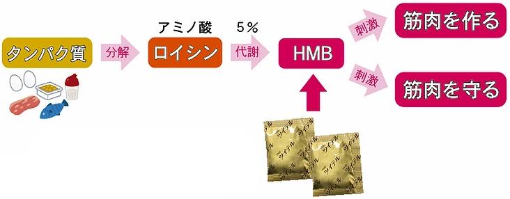 ツイテル,HMB,カルシウム,プロテオグリカン,グルコサミン,コンドロイチン,Ⅱ型コラーゲン